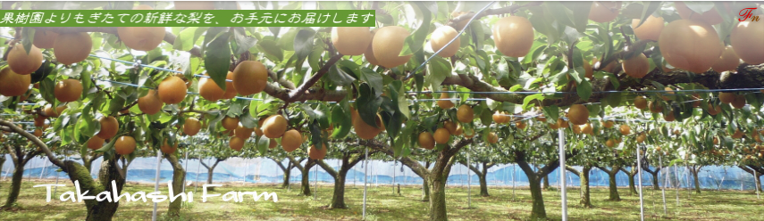 日本一美味しい白井の梨を産地直送で買えるサイト