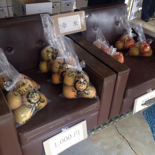 【食レポ】白井市にある梨直売所、鈴木果樹園の秋水が甘くてとても美味しかった