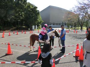 乗馬体験にお笑いライブ、柏レイソルの選手も来る『第34回白井ふるさと祭り』が開催されるよ〜!
