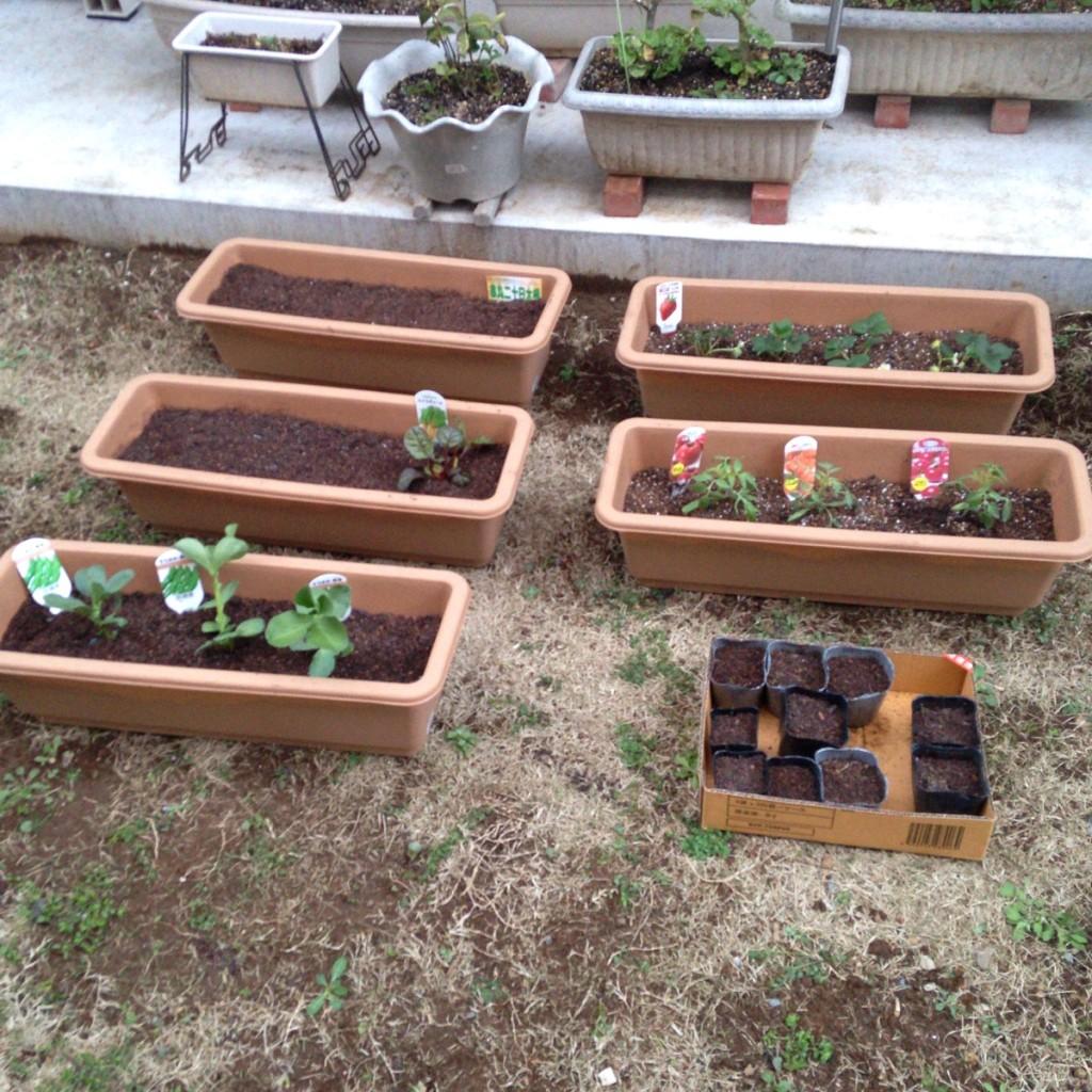 私が家庭菜園をはじめた理由