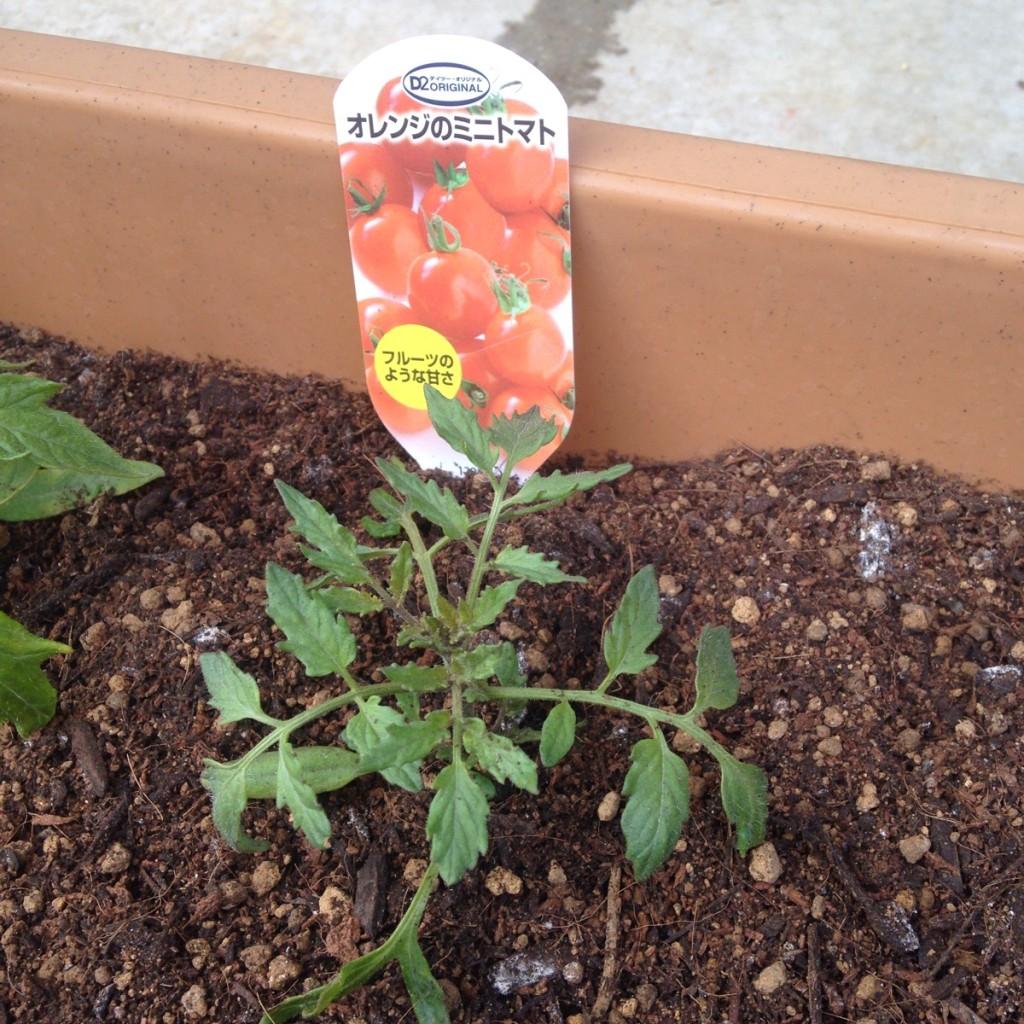 家庭菜園で育てている14種類の野菜達(2016年3月現在)